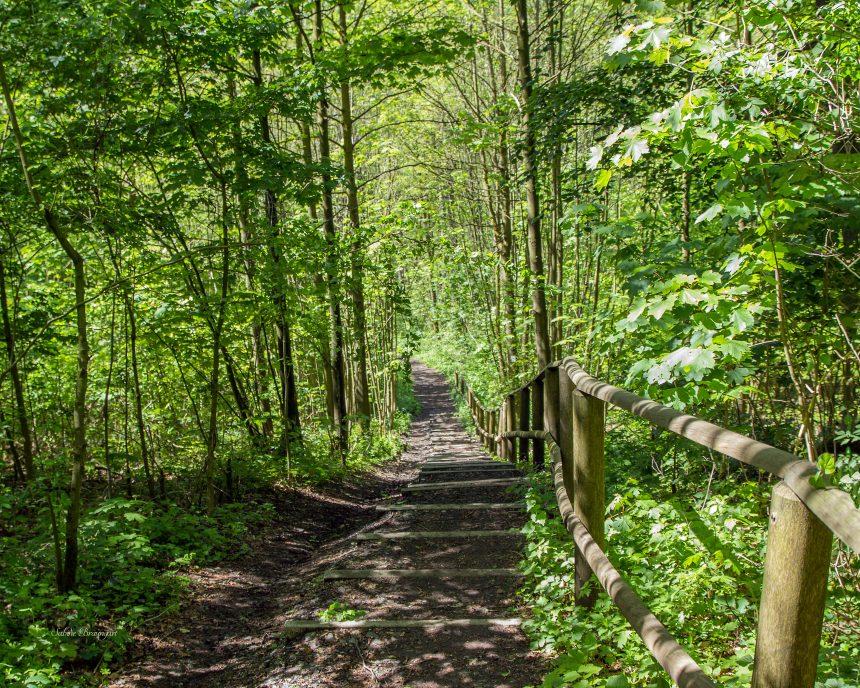 Wanderwochen im Ringhotel Teutoburger Wald
